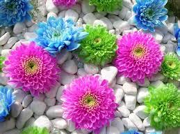 بالصور صور زهور , اشكال ورود جميلة 330 5