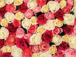 بالصور صور زهور , اشكال ورود جميلة 330 8