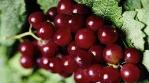 فوائد العنب الاحمر , اهميه تناول العنب الاحمر