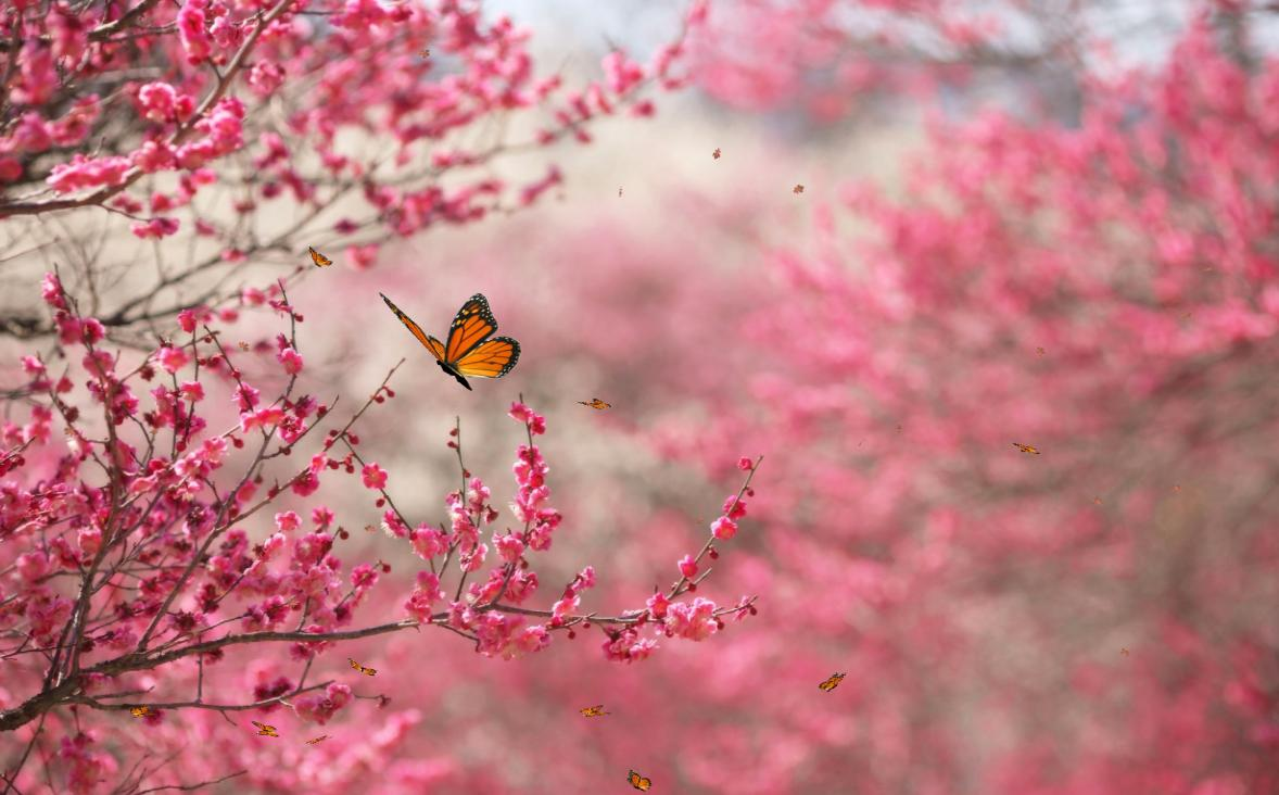 صوره صور جمال الطبيعة , ابداع الخالق فى الكون