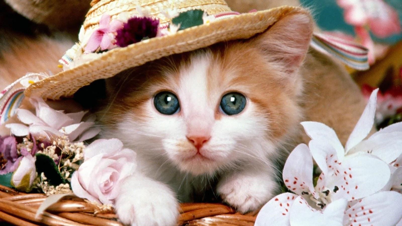 بالصور صور قطط كيوت , قطط شكلها جميل 4857 1