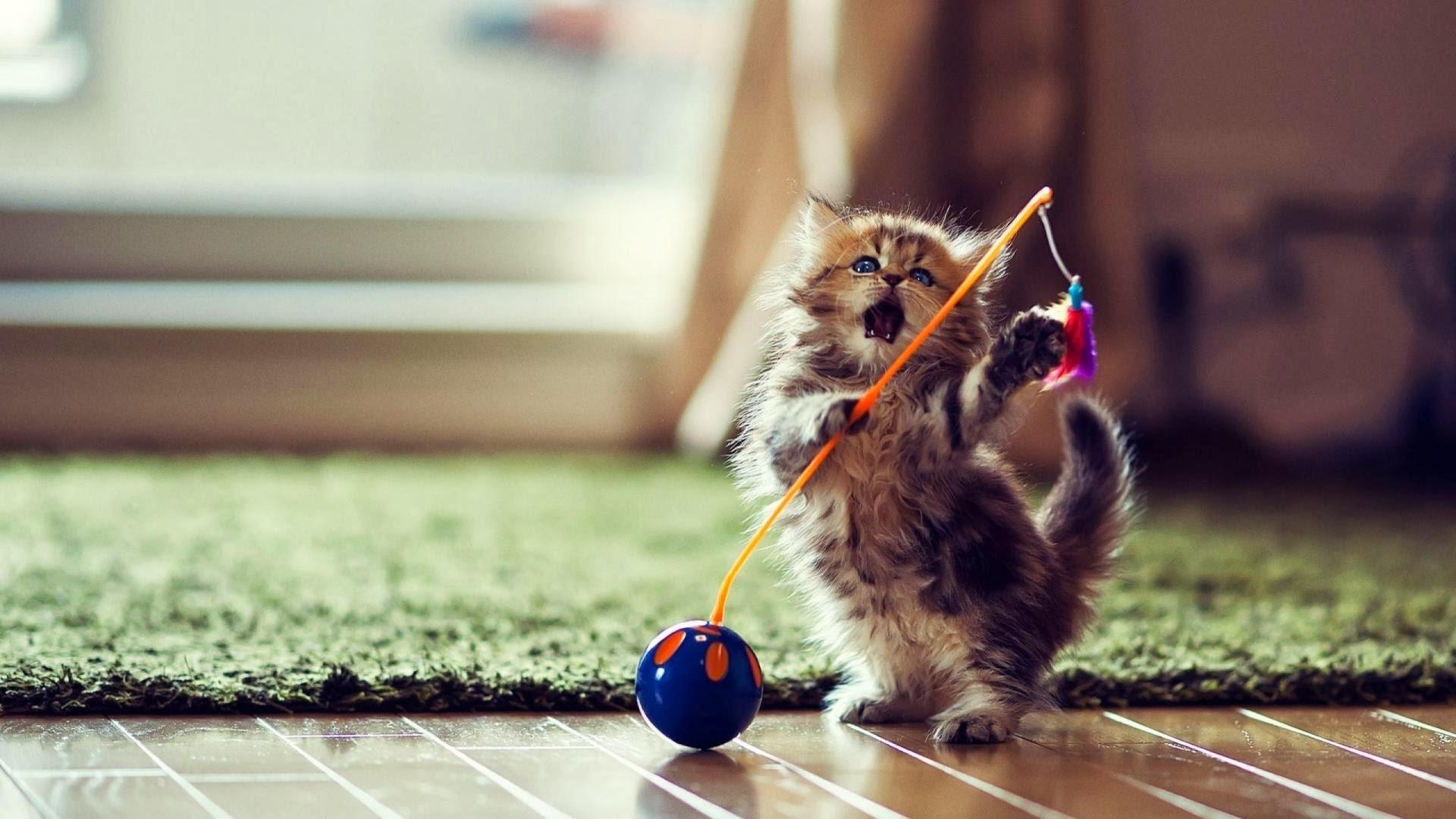 بالصور صور قطط كيوت , قطط شكلها جميل 4857 10