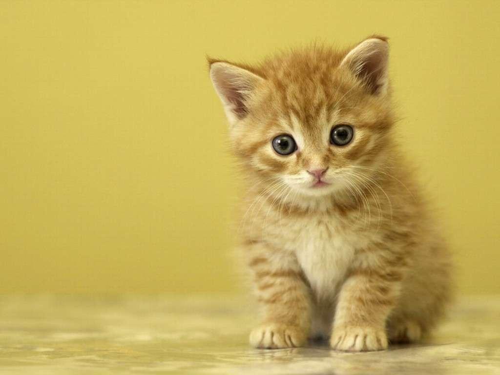 بالصور صور قطط كيوت , قطط شكلها جميل 4857 11