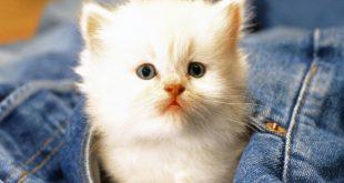 صورة صور قطط كيوت , قطط شكلها جميل
