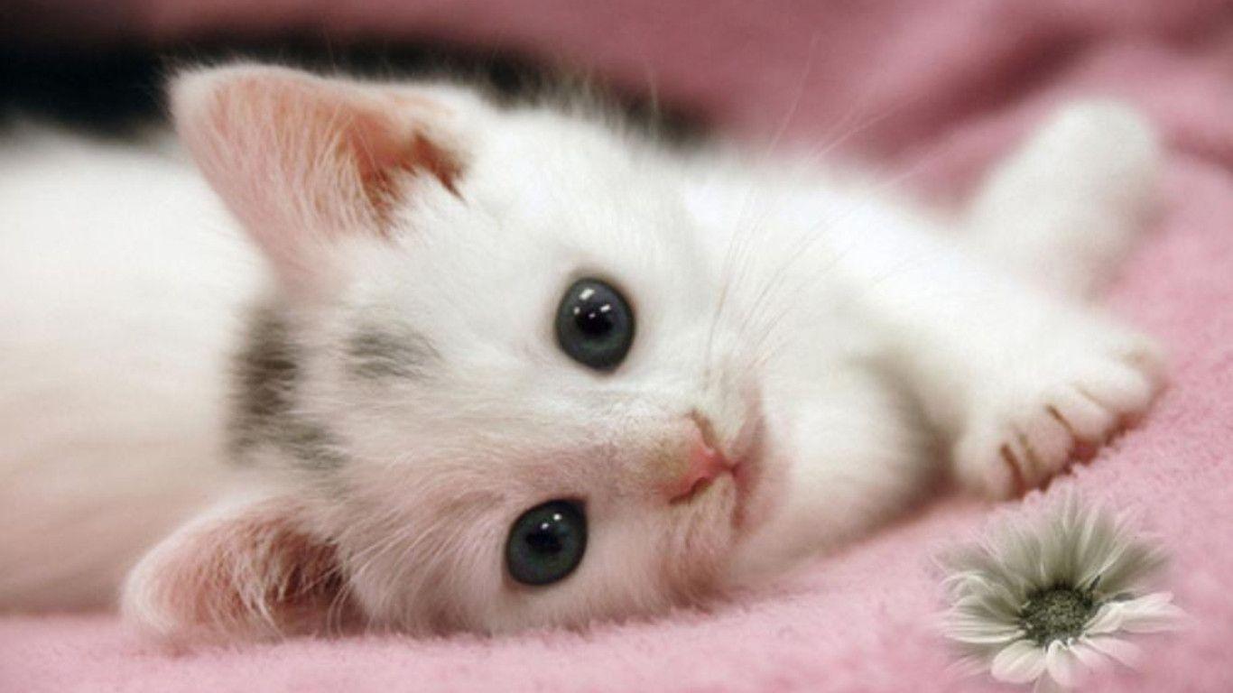 بالصور صور قطط كيوت , قطط شكلها جميل 4857 2