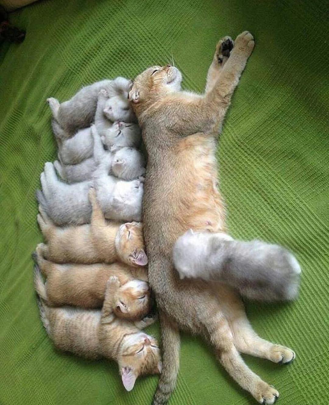 بالصور صور قطط كيوت , قطط شكلها جميل 4857 3
