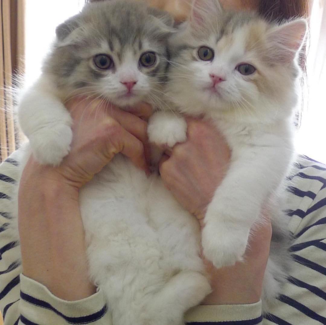 بالصور صور قطط كيوت , قطط شكلها جميل 4857 4