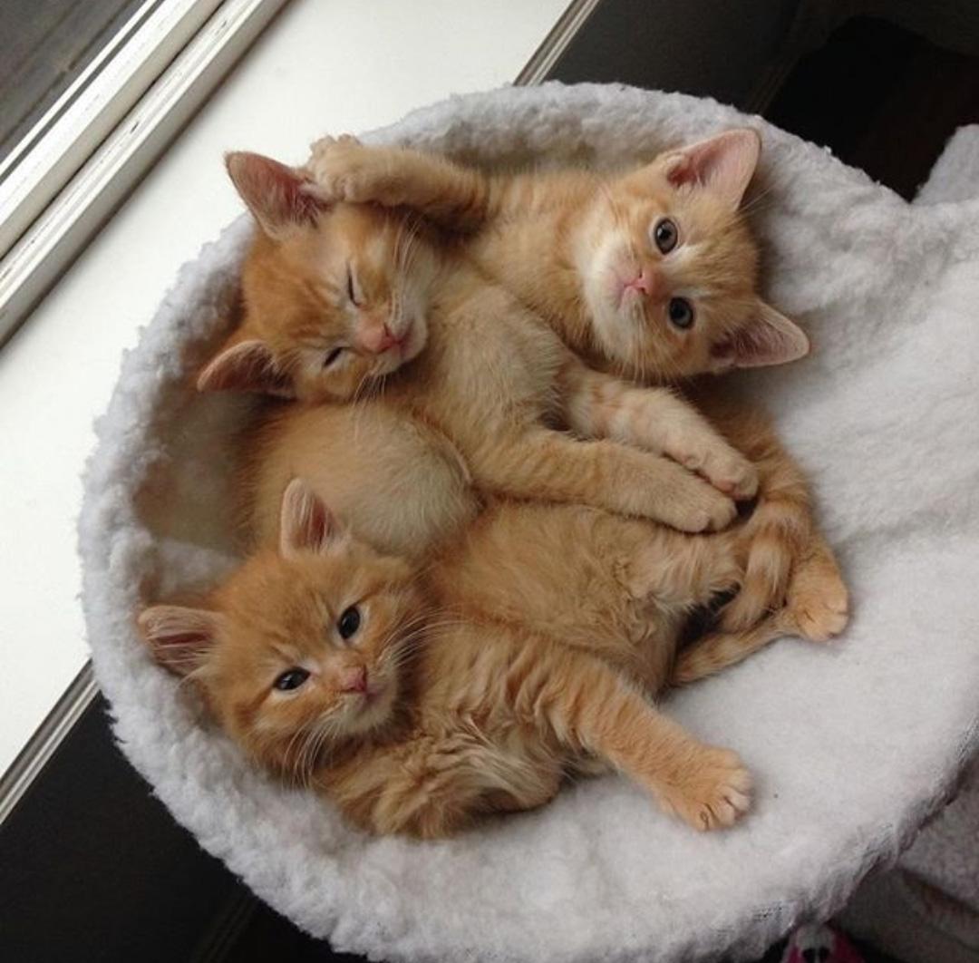 بالصور صور قطط كيوت , قطط شكلها جميل 4857 5