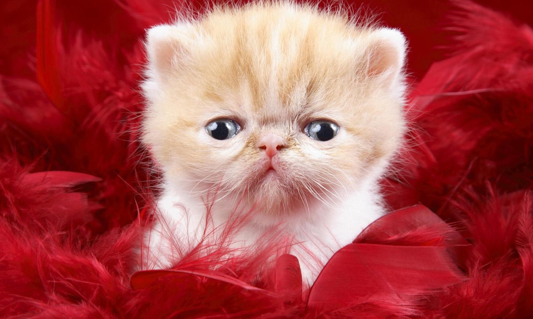 بالصور صور قطط كيوت , قطط شكلها جميل 4857 6