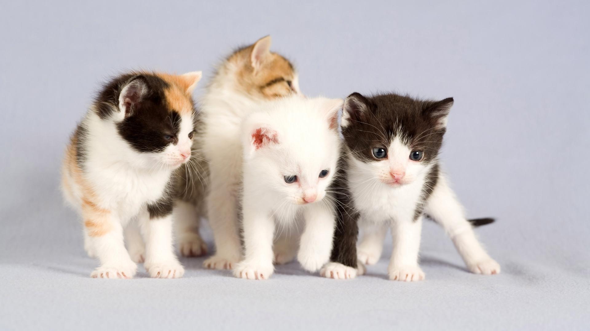 بالصور صور قطط كيوت , قطط شكلها جميل 4857 7