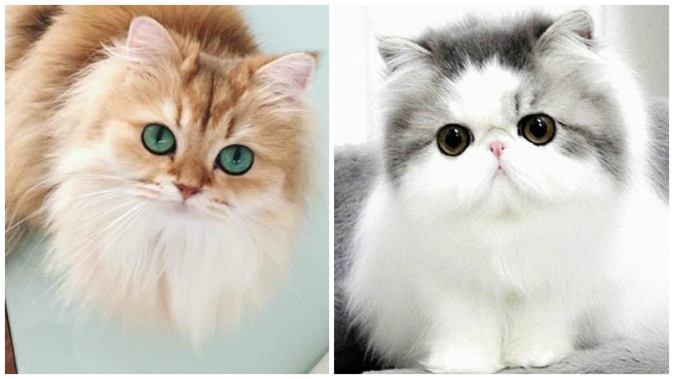 بالصور صور قطط كيوت , قطط شكلها جميل 4857 8
