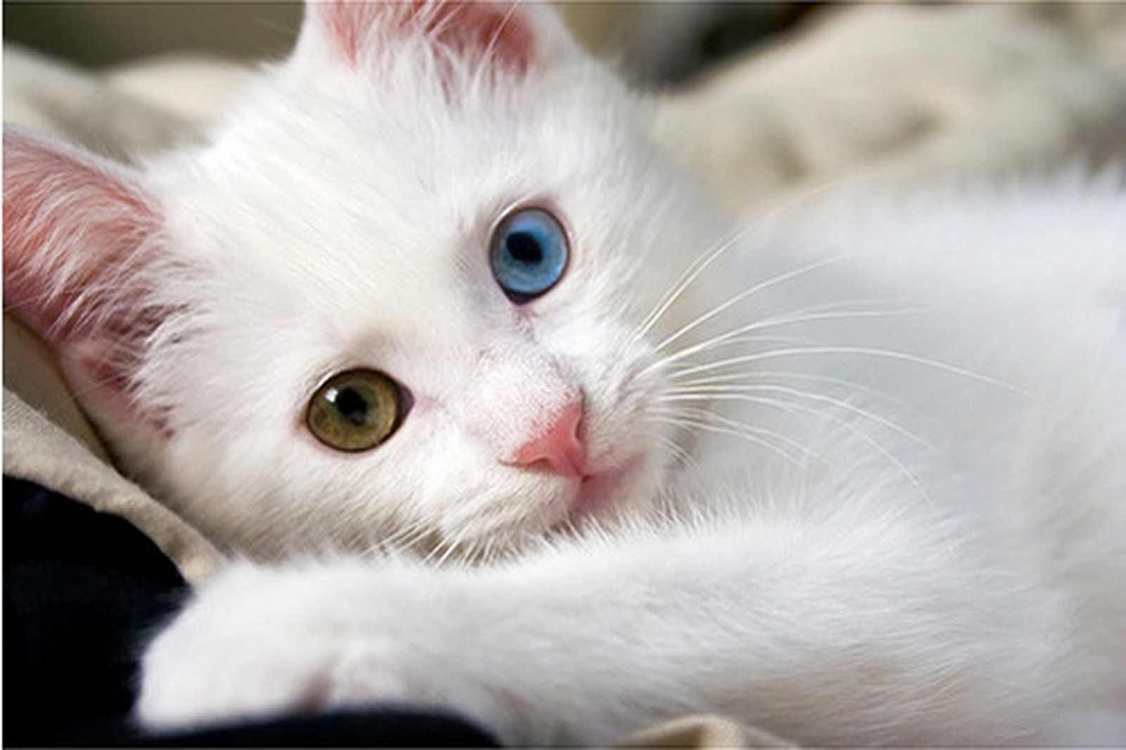 بالصور صور قطط كيوت , قطط شكلها جميل 4857 9