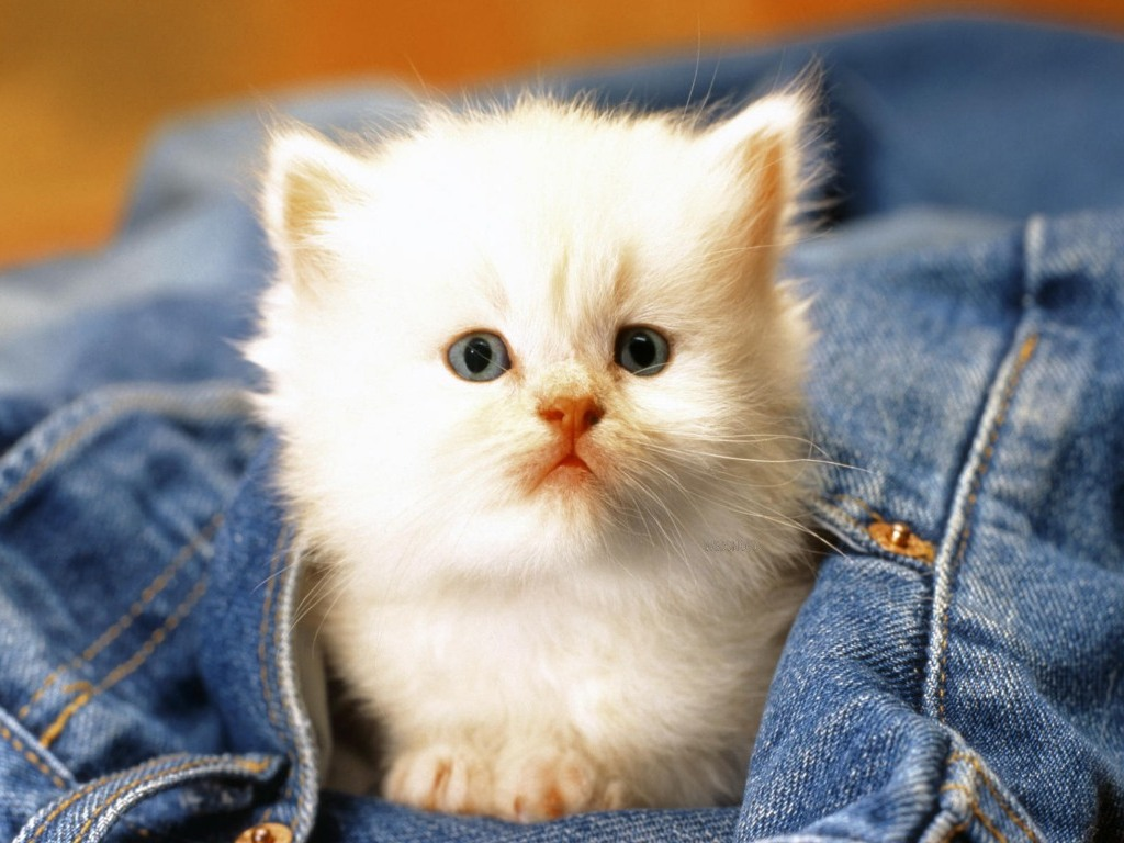 بالصور صور قطط كيوت , قطط شكلها جميل 4857