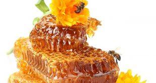 صوره فوائد غذاء ملكات النحل , اهميه تناول ملكات النحل