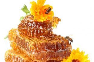 بالصور فوائد غذاء ملكات النحل , اهميه تناول ملكات النحل 5115 3 310x205