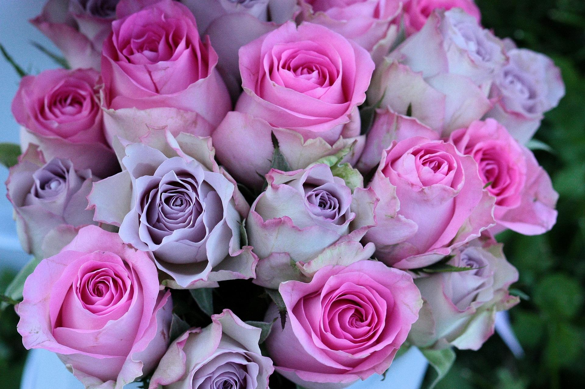 صورة اجمل صور الورد , الجمال يتكلم بحب 5915 2