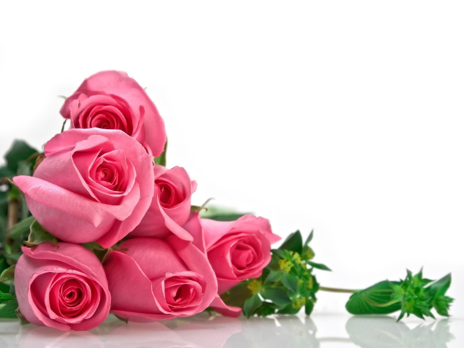 صورة اجمل صور الورد , الجمال يتكلم بحب 5915 3