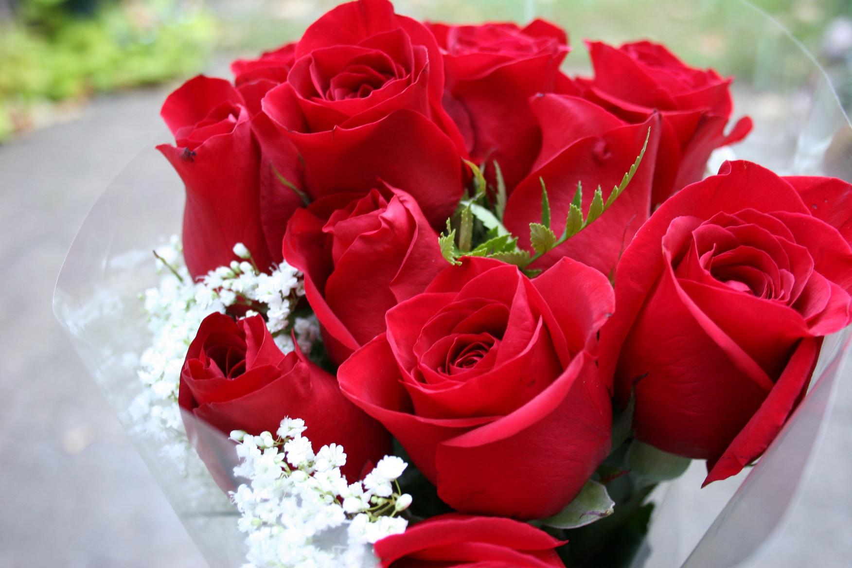 صورة اجمل صور الورد , الجمال يتكلم بحب 5915 6