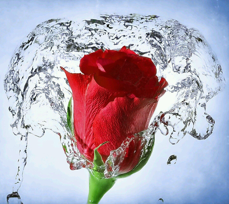 صورة اجمل صور الورد , الجمال يتكلم بحب
