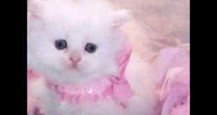 صورة اجمل صور قطط , صور حيوانات اليفة