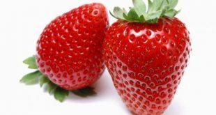 صوره فوائد الفراولة , فواكة لذيذة مغذية