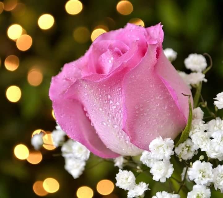 صور صور احلى ورد , زهور مختلفة وجميلة