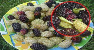 صوره فوائد التوت , فاكهة التوت اللذيذة