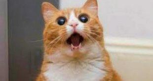 صورة قطط مضحكة , حيوانات اليفة حبوبة