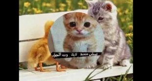 صوره صور قطط مضحكة , حيوانات لطيفة وكيوت