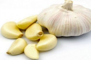بالصور ما فوائد الثوم , تعرف على فائدة تناول الثوم 1763 3 310x205