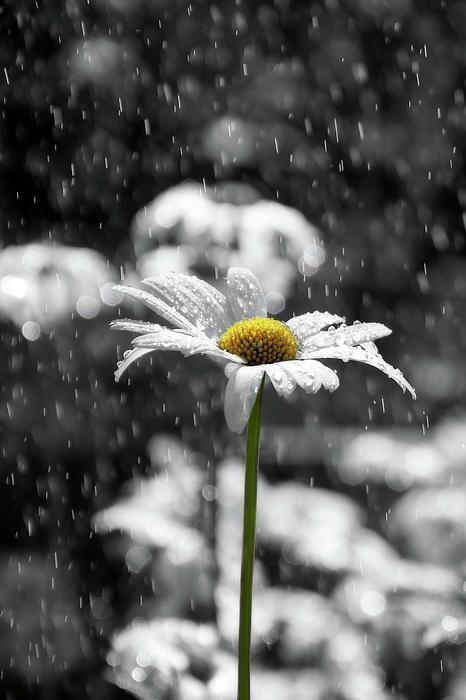 بالصور خلفيات مطر , مناظر مطر خلفيات روعة 1812 5