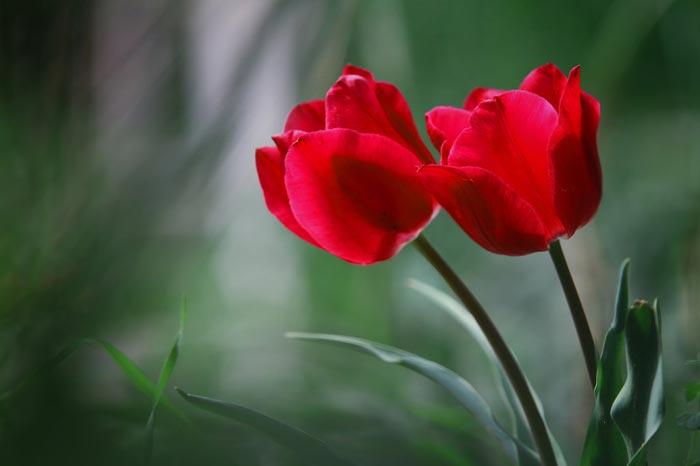 صور ازهار جميلة , ازهار ما اروعها