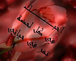 بالصور كلمات حب رومانسية , اجمل الكلمات الرومانسيه 331 12