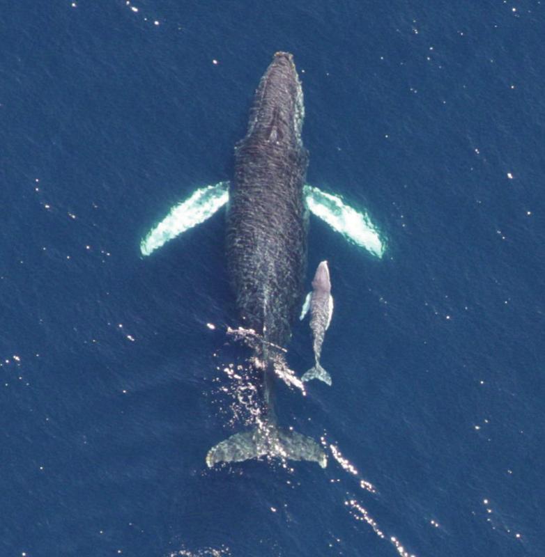 بالصور اكبر حيوان في العالم , لا يفوتك مشاهده اكبر حيوان بالعالم 4320