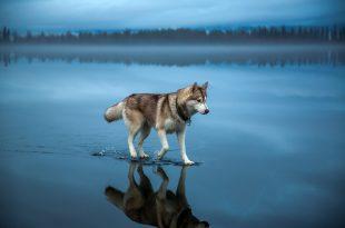 بالصور احلى صور بالعالم , اجمل و افضل صور بالعالم HD 4511 14 310x205