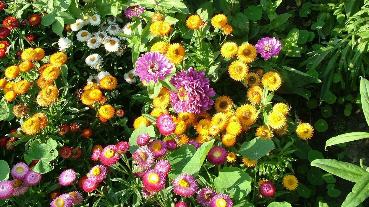 بالصور صور ورد طبيعي , اجمل اشكال الزهور بالصور 4891 11