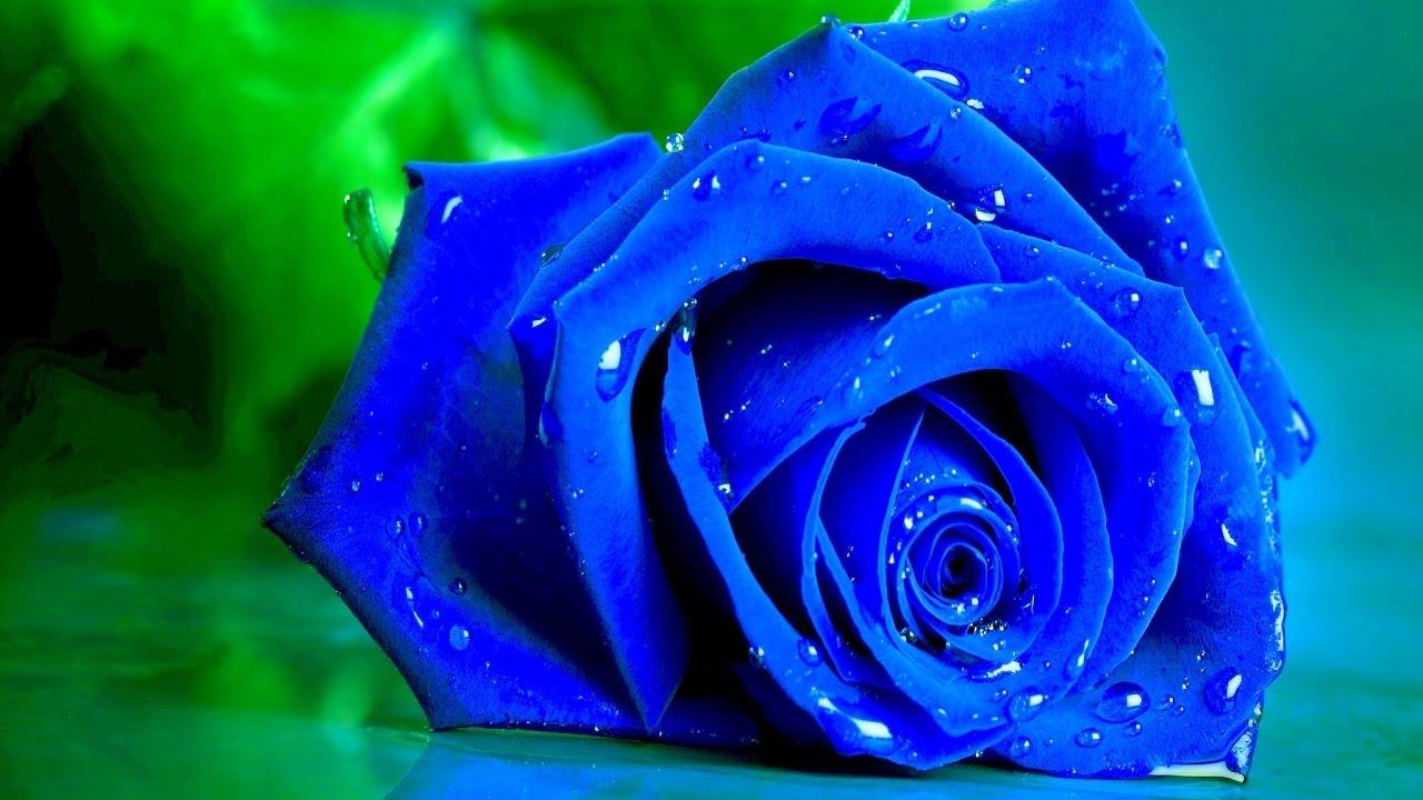 بالصور صور ورد طبيعي , اجمل اشكال الزهور بالصور 4891 13