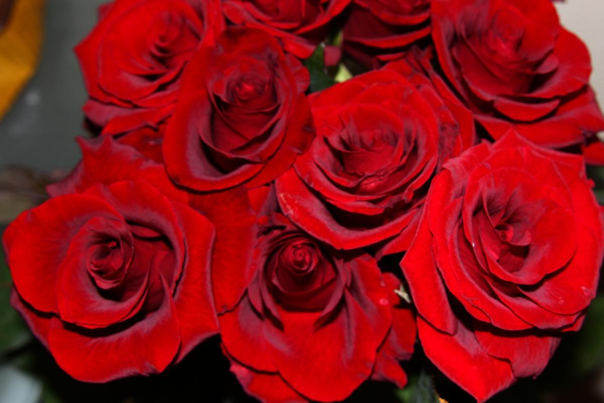 بالصور صور ورد طبيعي , اجمل اشكال الزهور بالصور 4891 3