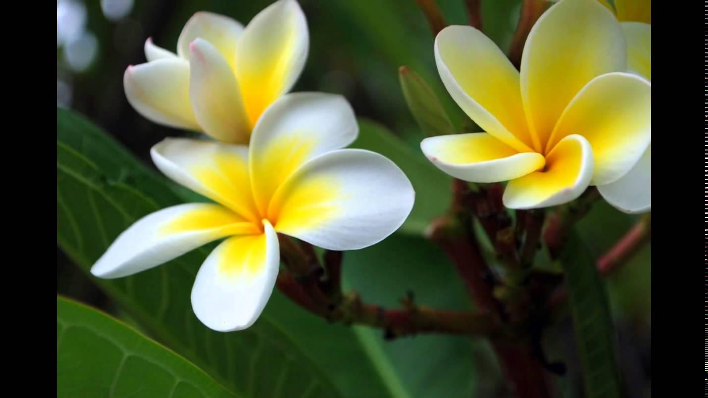بالصور صور ورد طبيعي , اجمل اشكال الزهور بالصور 4891 6