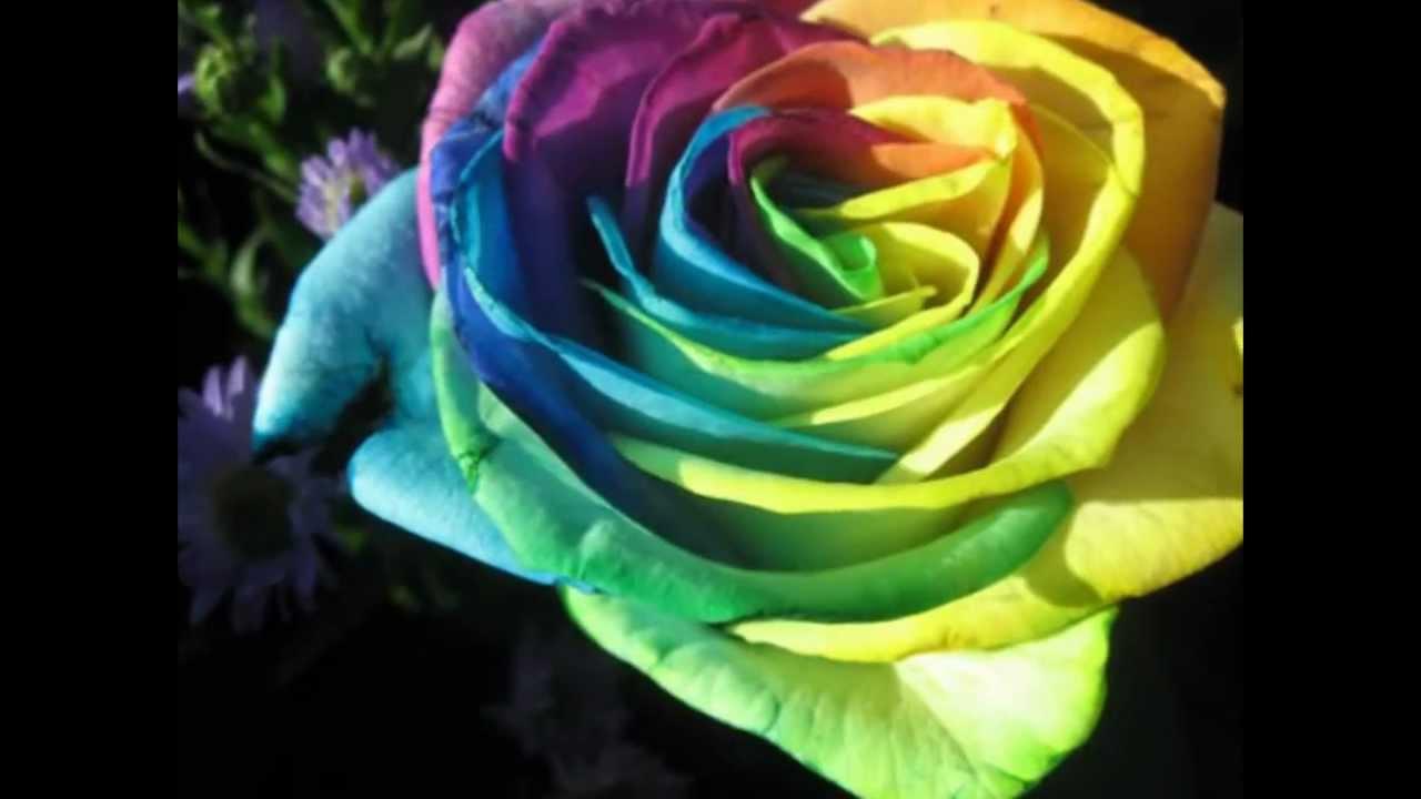 بالصور صور ورد طبيعي , اجمل اشكال الزهور بالصور 4891 7