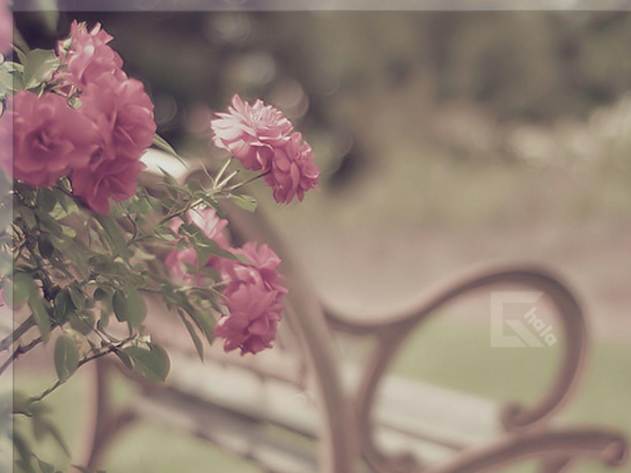 بالصور صور ناعمه , اجمل الصور الرقيقه الهادئه الكيوت 4959 9