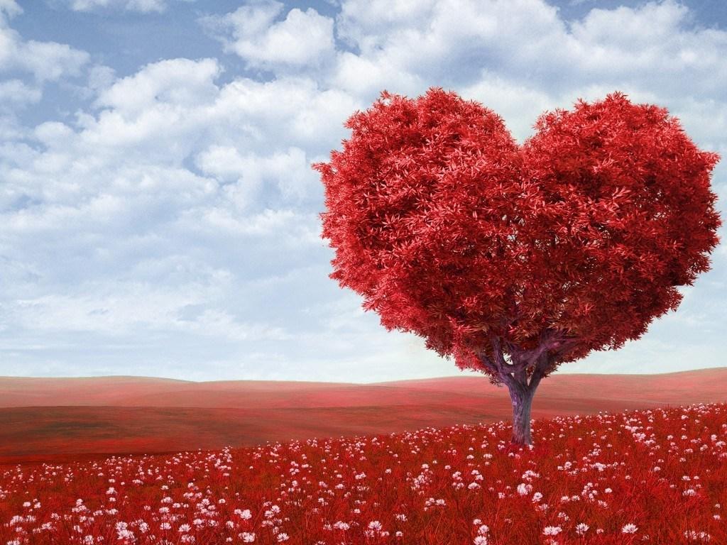 بالصور صور جميله رومانسيه , روعه العشق والغرام والرومانسيه بالصور 4966 8