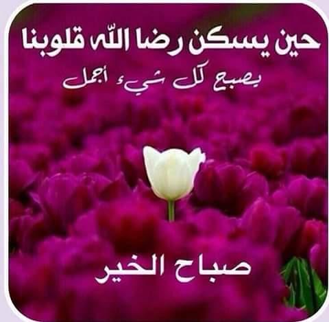 بالصور خلفيات صباحيه , صباح الروقان والفرفشة 503 4