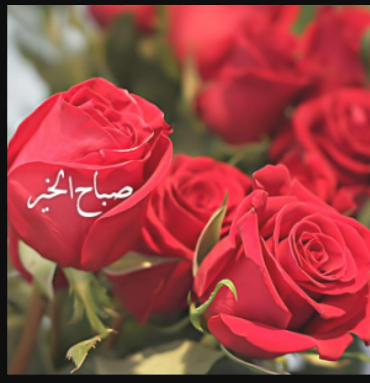 بالصور صور صباح الحب , اجمل صور صباح المحبه والتفاوءل 5043 11