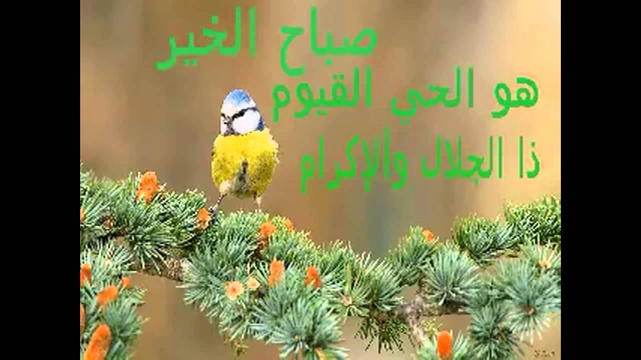 بالصور صور صباح ومساء الخير , اجمل الصور المعبره عن الصباح والمساء 5070 4