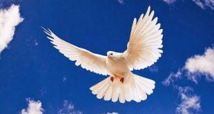 صور صور عن السلام , صور مذهله تعبر عن السلام
