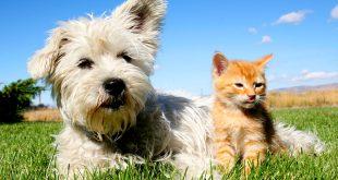 صورة قطط وكلاب , صور مدهشه للقطط والكلاب