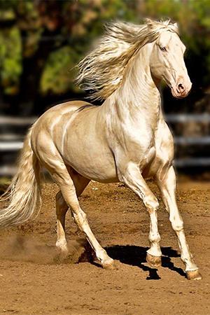 بالصور اجمل حصان في العالم , حصان جميل المنظر 673 4
