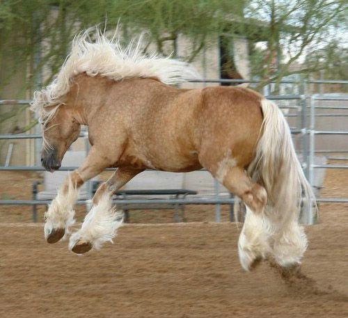 بالصور اجمل حصان في العالم , حصان جميل المنظر 673 9