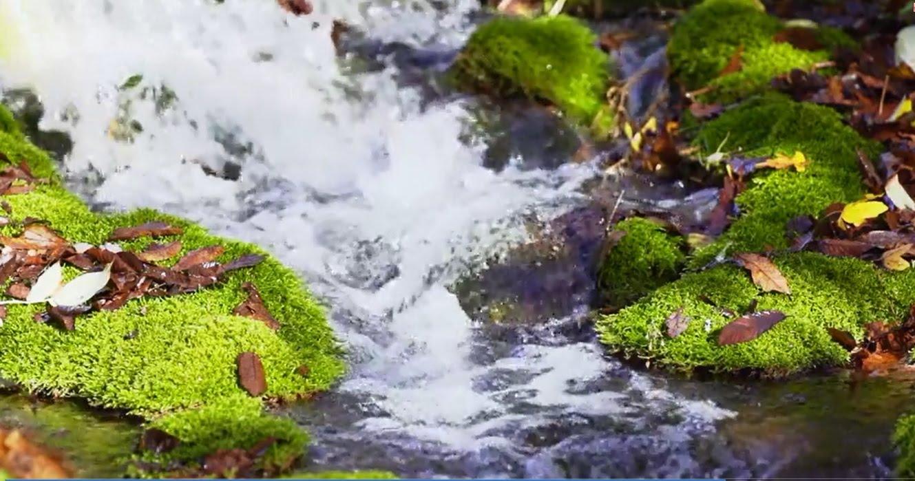 بالصور مناظر طبيعية متحركة , اجمل المناظر التي تعجبك 580 12